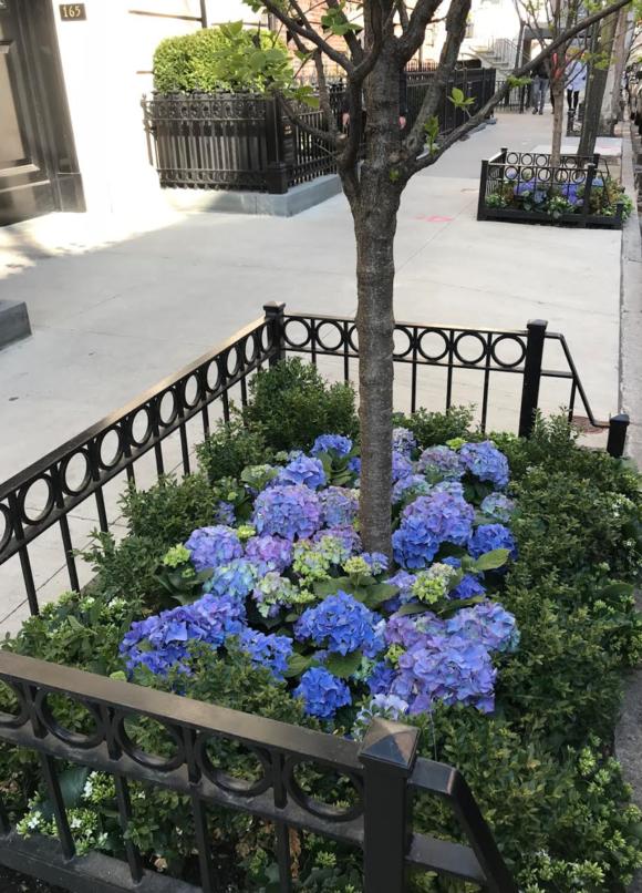 Springtime in New York Prima Darling